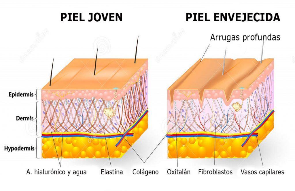 Envejecimiento de la piel. Dibujo